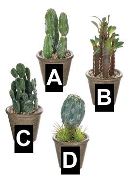 Cactus Potted