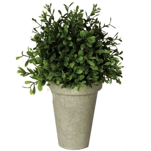 Potted Boxwood (Large)