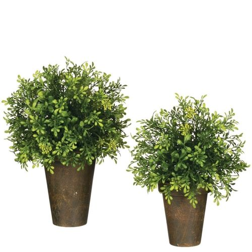 Potted Tealeaf Greenery (Large)