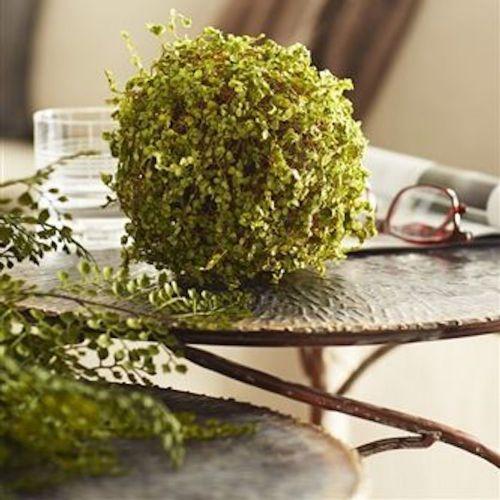 """Moss Orb 7""""D"""