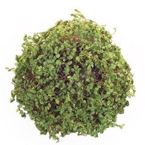 Moss Orb 7