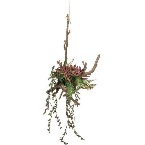 Aloe Hanging Succulent