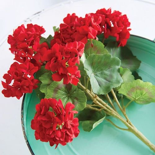 Red Geranium Bush