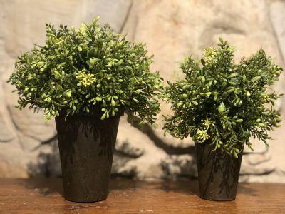 Potted Tealeaf Greenery (Large)