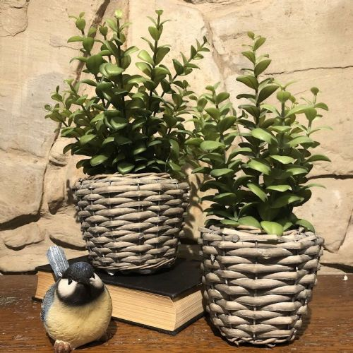 Plant In Basket Large
