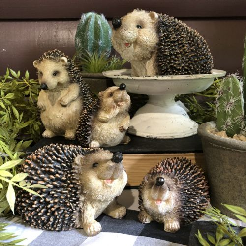 Hedgehog Medium