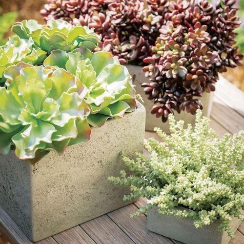 Ruffled Succulent