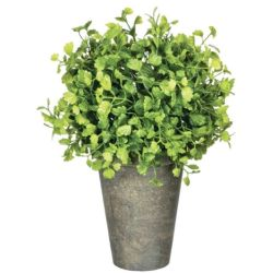 Potted Maiden Hair Fern (Large)