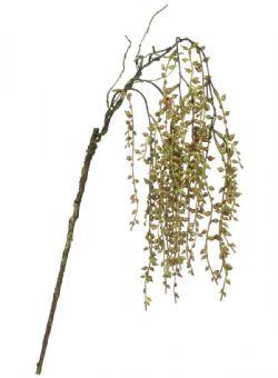Hanging Succulent Spray