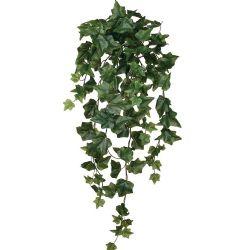Ivy Bush Green