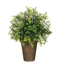 Potted Tealeaf Greenery (Small)