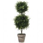 Topiary Double Ball Boxwood 19.5