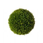 Sedum Ball (Large)