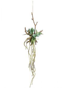 Echeveria Hanging Succulent