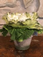 V-Cabbage In Pot (Green/White))