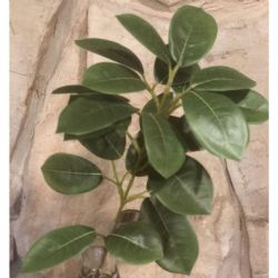 Lemon Leaf Stem