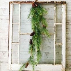 Black Hills Pine Hanging Vine | 4 Ft