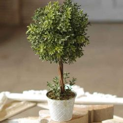 Topiary New England Boxwood